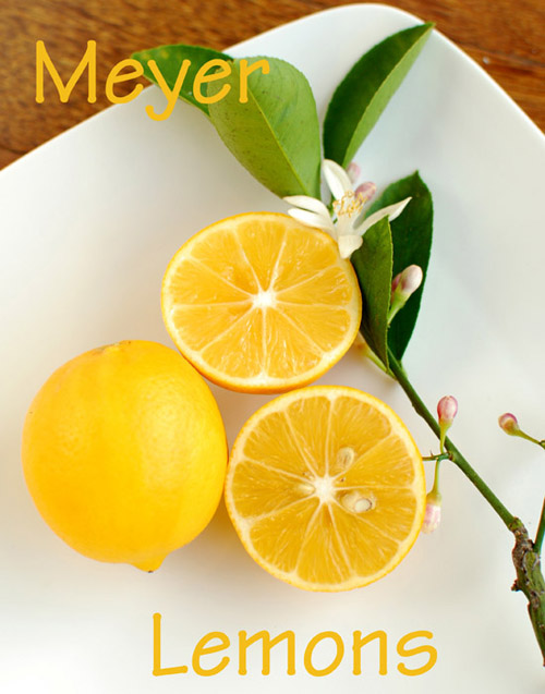 Post image for Getting Ready to Garden & Meyer Lemon Giveaway
