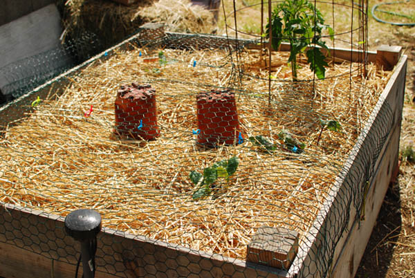Caged Garden Bed